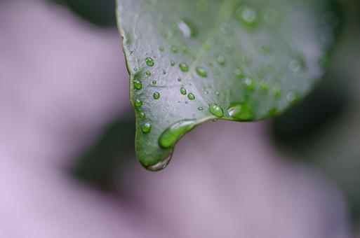 雨 濡れる 濡れた 雫 しずく 水滴 水分 水 露 雨天 クローズアップ 自然 風景 植物 葉 草 葉っぱ 悪天候 屋外 野外 ウェット 自然背景 雨粒 レイン