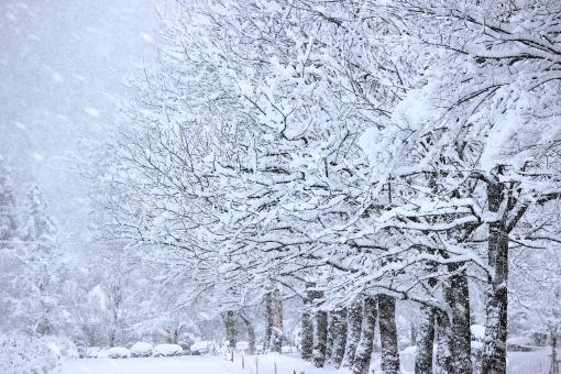 「冬 景色 フリー」の画像検索結果