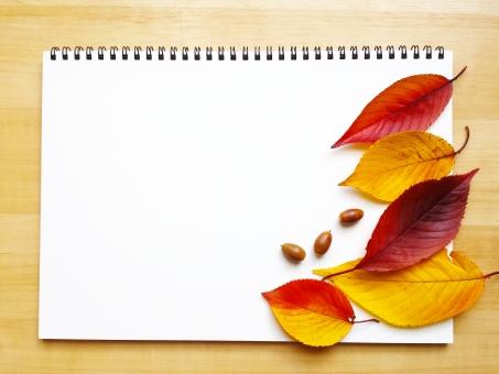 秋 あき 落ち葉 スケッチブック 紅葉 どんぐり ドングリ コピースペース バックグラウンド フレーム sketchbook ノート note メモ帳 めも もみじ モミジ イラスト 水彩画 枠 デッサン 美術部 枯葉 かれは バインダー 紙 かみ paper ペーパー autumn autumn コンテ画 白バック 葉脈 木の実 おちば 赤色 黄色 茶色 あかいろ きいろ ちゃいろ いらすと