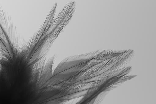 羽 はね 羽根 鳥の羽 鳥 グレー 灰色 ものくろ モノクロ 影 陰 かげ 美しい 綺麗 幻想的 神秘的 シンプル ふわふわ フワフワ 柔らかい やわらかい なびく 毛 鳥の毛 空 そら 青空 エコ 環境 eco 自然 動物 鳥類 背景 テクスチャ テクスチャー 壁紙 素材 イメージ 羽ばたく 天使 エンジェル 2017年 酉年 とり 2017 2017 2017年
