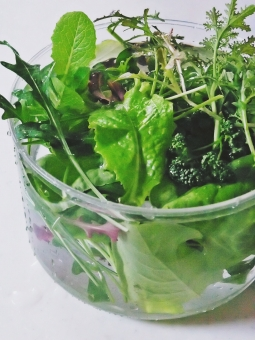 自家製 野菜 ベランダ菜園 柔らかい ビタミン ダイエット 酵素 スプラウツ ルッコラ サラダ菜 朝 フレッシュ 美 ヘルシー