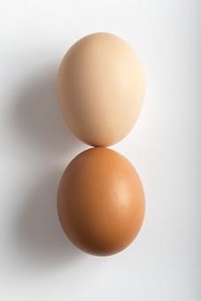 たまご 卵 玉子 エッグ 楕円 白バック 卵色 ベージュ 白 料理 並べる 生き物 食べ物 食材 食料 置く 置いてある 物撮り 屋内 人物なし 上から 殻 斑点 2個 整然 複数 レシピ 白とベージュ 対比 影 白い床 白背景 鶏 にわとり ニワトリ