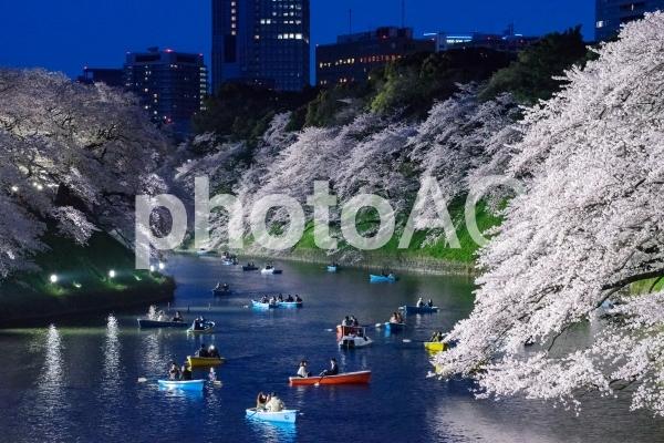 夜桜の写真