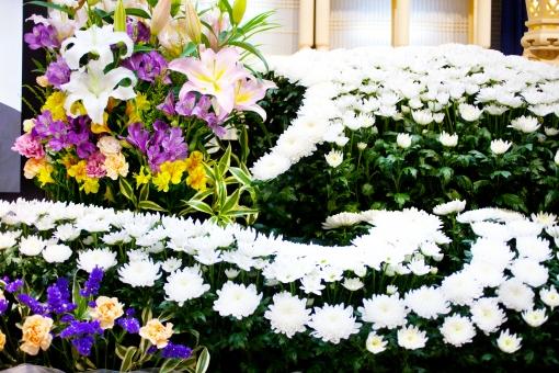 葬儀場 葬式 白菊 菊 白 告別式 通夜 葬儀のイメージ 植物 花 コピースペース バックグラウンド 葬儀イメージ 悲しみ 祭壇 紫の花 紫 蕾 つぼみ 咲く 終活 思い 寂しさ 葬儀 死