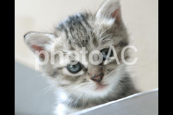 子猫_箱の中_80の写真