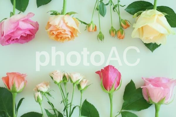 薔薇のフレーム 4の写真
