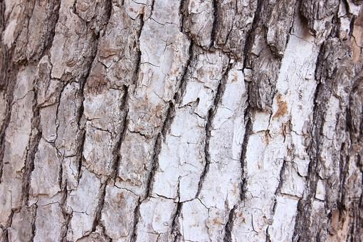 木 木の幹 樹皮 木の皮  木肌 背景 背景素材 バックグラウンド 植物 自然 テクスチャ 模様 樹木 幹 灰色