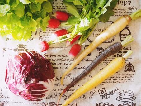 トレビス 紫野菜 人参 黄色 黒 ラディッシュ 赤 リーフレタス サラダ用 ビタミン 酵素