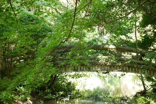 濁る 濁った 葉っぱ 葉 池 水 自然 植物 水面 樹木 植物 外 屋外 日なた 日中 晴れ 晴天 環境 癒し 森林浴 鏡池 森 森林 枝 橋