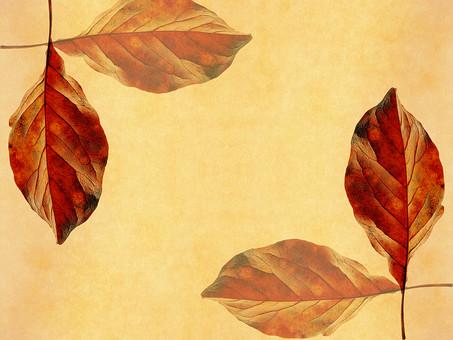 葉 落ち葉 枯れ葉 ドライリーフ 木の葉 素材 葉脈 植物 自然 ベージュ 黄色 オレンジ パターン 暖色 ナチュラル 暖かい 対称 乾燥 空間 テクスチャ 質感 背景 背景素材 バックグラウンド テキストスペース コピースペース 透かし 透ける 半透明 秋 十字 クロス 枠 フレーム 紅葉 加工 写真加工