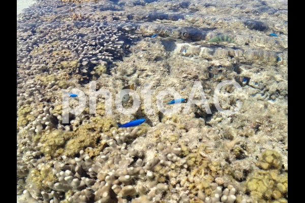 サンゴと綺麗な魚の写真