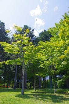山奥 山 深緑 緑 グリーン 新鮮 空気 酸素 空 快晴 晴れ 晴天 曇り 白い雲 自然 環境 問題 エコ 青空 ブルースカイ 空 一本木 樹木 植物 芝 広場 鮮やか 木漏れ日 夏