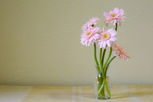 ピンクの花 花瓶 一輪挿し ガラスの花瓶 花のある生活 かわいい がーべら ガーベラ コピースペース バックグラウンド ピンク ピンク色 プレゼント 屋内 明るい 桃色 植物 生花 緑色 背景 花 ガラス