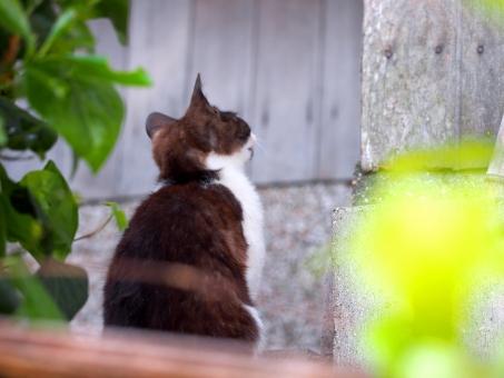 猫 ねこ ネコ 島猫 島ねこ 島ネコ 後ろ姿 後ろ 待つ 待つ猫 ノラねこ ノラネコ ノラ猫 野良ねこ 野良ネコ 野良猫 のらネコ のら猫 のらねこ のら ノラ 野良 おねだり 子猫 仔猫 こねこ