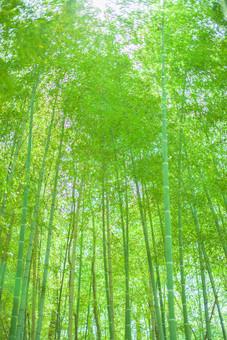 自然 植物 木 樹木 竹 バンブー 竹林 林 森 森林 空 成長 伸びる 育つ 高い 葉 葉っぱ 緑 密集 多い 集まる 沢山 並ぶ ローアングル アップ 無人 室外 屋外 風景 景色 加工 太陽 太陽光 光 陽射し 木漏れ日 幻想的