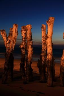 サン・マロのムール貝養殖用木杭3の写真