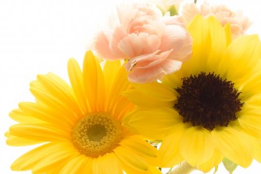 母の日 父の日 誕生日 フラワーギフト お祝い メッセージ メッセージカード カード コピースペース 文字スペース ひまわり ヒマワリ 向日葵 ガーベラ カーネーション フラワーアレンジ アレンジ 黄色 コーラルピンク ピンク 白 白バック 背景 クローズアップ アップ ビタミンカラー バックグラウンド テクスチャ 壁紙 フラワーアレンジメント 花 植物 プレゼント 贈物 贈りもの 贈り物 花束 花言葉