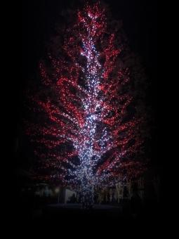 クリスマス ツリー クリスマスツリー christmas Xmas 12月 幻想的 ライトアップ ライト 赤 レッド 綺麗 背景 風景 クリスマス背景 イベント イベント背景 card カード クリスマスカード Xmasカード 綺麗な背景 冬の背景 素材 Xmas素材 REDライト tree 季節の素材 季節の風景 ピカピカ