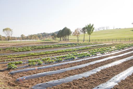 風景 自然 牧歌 のどか 田舎 環境 青空 空 晴れ 屋外 野外 外 景色 木 樹木 緑 畑 農業 農家 田畑 栽培 植物 育てる 育成 土 泥 野菜 食物 葉 ビニール 世話 管理