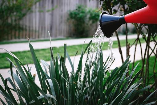 ガーデニング 園芸 栽培 花 草花 草木 植物 じょうろ 水やり 遣る 注ぐ 育てる 水分 水 ガーデン 庭 庭園 庭先 アプローチ 塀 庭仕事 庭いじり 作業 手入れ 世話 園芸用品 屋外 野外