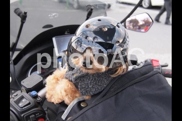 バイク犬、ティナの旅。の写真