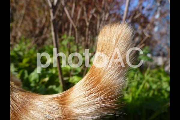 公園の猫のしっぽの写真
