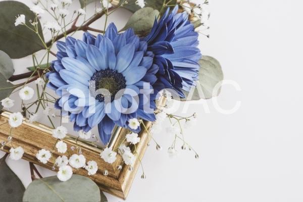 青いガーベラのフレームの写真