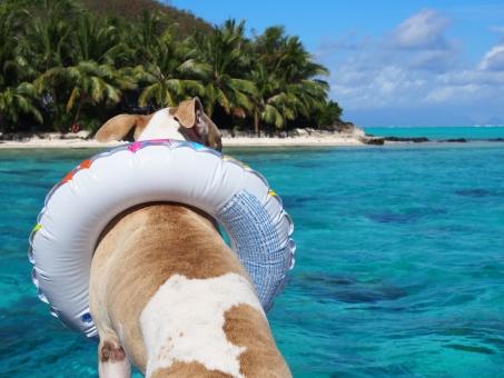 犬 浮輪 うきわ 雑種 海外 クール スタイリッシュ 南国 ヤシ 島 ボラボラ 海 透明 青 エメラルドグリーン 空 雲 綺麗 キレイ 動物 ペット かわいい かっこいい 海水浴 海面 緑 砂浜 ビーチ プライベート たそがれ