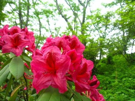 緑 癒やし グリーン 新緑 背景 植物 初夏 テクスチャ 余白 赤い花 赤 赤い 花 季節 5月