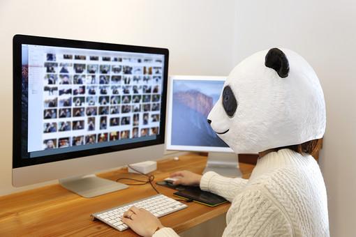 動物 動物マスク 人物 人間 ビジネス 会社 社員 会社員 女性 OL 1人 パンダ 仕事中 集中 黙々 画面 マウス キーボード 操作 クリック パソコン オフィス デスクワーク デザイナー  クリエイティブ 屋内 LionPresident