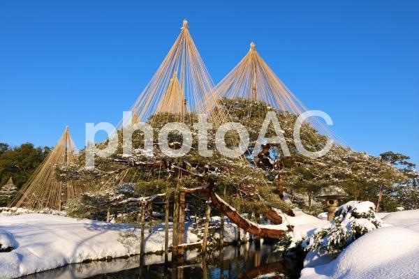 雪吊りの写真