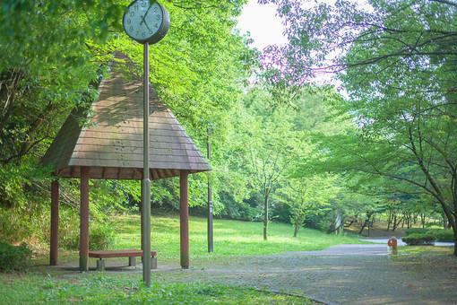 自然 風景 景色 環境 スナップ 旅行 散歩 公園 森林 緑 林 光合成 日光 季節 葉っぱ 植物 美しい きれい シルエット 野草 癒し 枝 木陰 木漏れ日 あずまや 時計