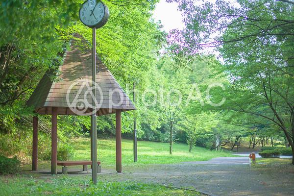 公園の風景の写真
