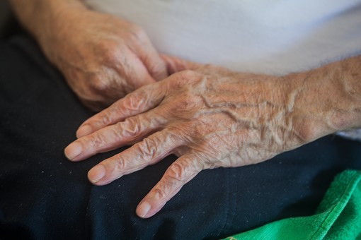 人物 老人 お年寄り 高齢者 シルバー   年老いた手 ハンドパーツ 手 指 ハンド   パーツ 手の表情 年老いた手 皺 しわ   シワ クローズアップ 男性 おじいちゃん おじいさん 両手 膝の上 手の甲 座る 手元 手先 指先