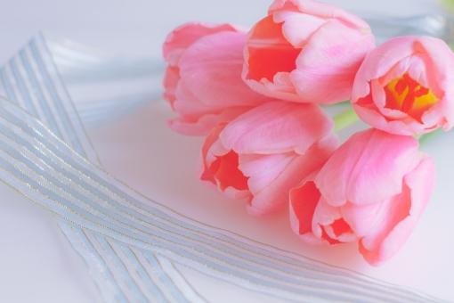 tulip 花 春 春の花 ピンク 幸せ 幸福 happy リボン 女性的 ブーケ 花束 ふんわり ふわり 優しさ 柔らかさ 柔和 やさしい プレゼント ギフト 気持ち 贈り物 メッセージ メッセージカード 文字入れ