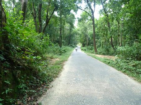 外国 バングラディッシュ バングラディシュ バングラデシュ インド ダッカ ベンガル 東南アジア 南アジア アジア イスラム インド洋 空 青空 自然 風景 景色 旅行 観光 樹 木 樹木 植物 産業 農業 発展途上国 開発途上国 熱帯植物  道 サイクリング 自転車