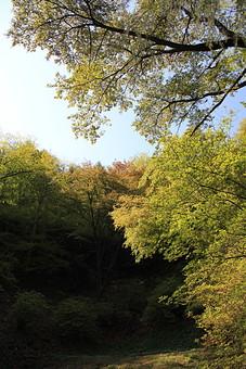 日本 国内 関東 関東山地 観光地 ハイキング 森林浴 トレッキング 登山 山登り 登山道 山 野外 アウトドア 自然 風景 植物 樹木 木立 林 森林 緑 木の葉 枯れ葉 落ち葉 空 青空 広葉樹 広葉樹林