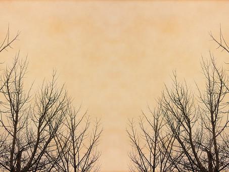葉 木 枯木 樹木 シルエット 素材  植物 自然 ベージュ パターン  ナチュラル  空間 テクスチャ 質感 背景 背景素材 バックグラウンド テキストスペース コピースペース  秋 冬 余白 フレーム 枝 シンプル モノクロ 飾り枠 加工 写真加工