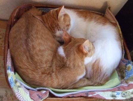 猫 ネコ 愛猫 寝る 昼寝 ベッド 親子 寄り添った くっついた 茶 白 三角耳 甘える 目をつぶる 家猫 飼い猫 室内猫 動物 リラックス 安心感 ぎゅうぎゅう かわいい 眠る 睡眠 寝転がる 寝そべった 横になる 室内 2匹 にゃらん親子