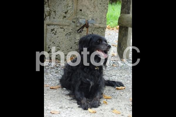 笑顔で待つ黒い犬の写真