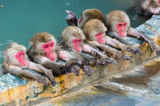 ニホンザル 猿 サル モンキー 類人猿 動物 哺乳類 猿人 ヒト科 申 申年 干支 温泉 泉 ほのぼの 函館 源泉 ゆったり 北海道 日本 お猿さん 水 くつろぎ 霊長類 お湯 風呂 いい湯だな~ 2016年
