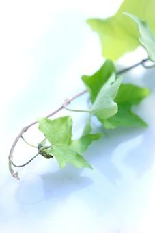 グリーン 4の写真
