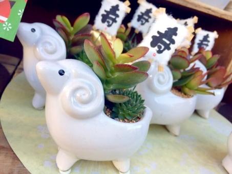 2015年 羊 ひつじ 寿 未 ヒツジ インテリア サボテン 観葉植物 動物 雑貨 年始 干支 えと 新年 装飾 植物 コトブキ 置物 ことぶき