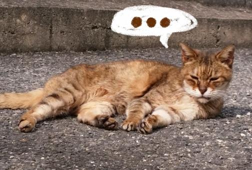 考える猫の写真