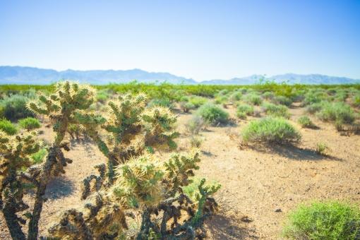 自然 植物 空 青空 青い グラデーション 晴天 天気 晴れ 山 山並み 山脈 もや ぼやける 木 樹木 緑 葉 葉っぱ サボテン 地面 土 壮大 広大 雄大 広い 無人 加工 室外 屋外 アメリカ 外国 風景 景色