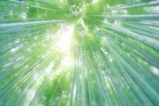 竹林テクスチャーの写真
