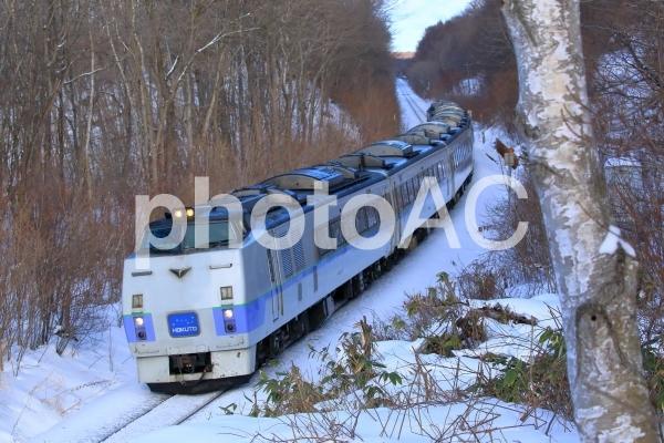 冬の森を駆け抜けるの写真