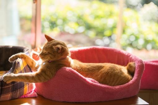 ねこ ネコ 猫 neko 家猫 飼い猫 室内 窓辺 猫ベッド ガラス 茶トラ うたた寝 ビタミンチャージ 癒し 愛おしい 可愛い 家族 ペット キュート ラブリー かぎしっぽ 日差し ほんわか にゃんこ 寝る子 お昼寝 夢の中 猫の日 肉球の日 猫ブーム