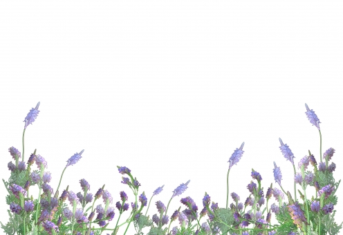 ラベンダー フレーム 枠 ハーブ デジタルボタニカルアート 水彩画風 清楚 樹木 木 葉っぱ 木の葉 新緑 緑 グリーン 初夏 夏 爽やか クリーンイメージ 木漏れ日 光 透過光 待ち受け 清潔感 澄んだ空気 若葉 眩しい テクスチャー 壁 壁紙 テクスチャ インテリア ナチュラル おしゃれ 温もり ぬくもり 白壁 白 コピースペース 背景 6月 ウエディング 花嫁 ウエルカムボード 文字スペース有り 紫 バイオレット 香り アロマ 北国 北欧 eu 自然 植物