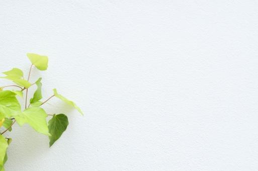 壁 かべ カベ 植物 素材 ウッド 白 ホワイト 白壁 葉 葉っぱ 緑 グリーン テキストスペース 文字スペース 背景 背景素材 コピースペース diy カフェ レストラン ショップ バック バックグラウンド テクスチャ